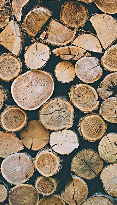nachhaltiger Anbau Holz